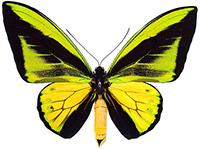 Mariposas diurnas Ibéricas